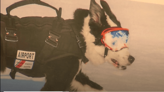 Community Invited to Sign Card, Share Memories of Airport K-9 Piper