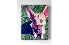 Dog Image Printed on Canvas
